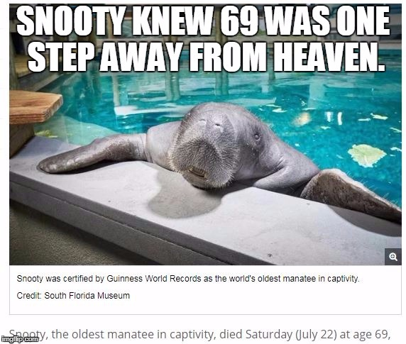 Snooty 69 | image tagged in nsfw,manatee,69,heaven | made w/ Imgflip meme maker