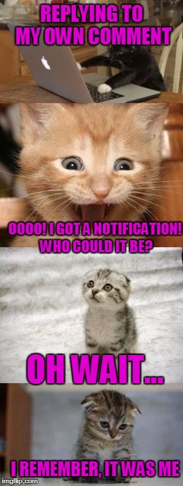 I can't be the only one | REPLYING TO MY OWN COMMENT OOOO! I GOT A NOTIFICATION! WHO COULD IT BE? OH WAIT... I REMEMBER, IT WAS ME | image tagged in cats | made w/ Imgflip meme maker