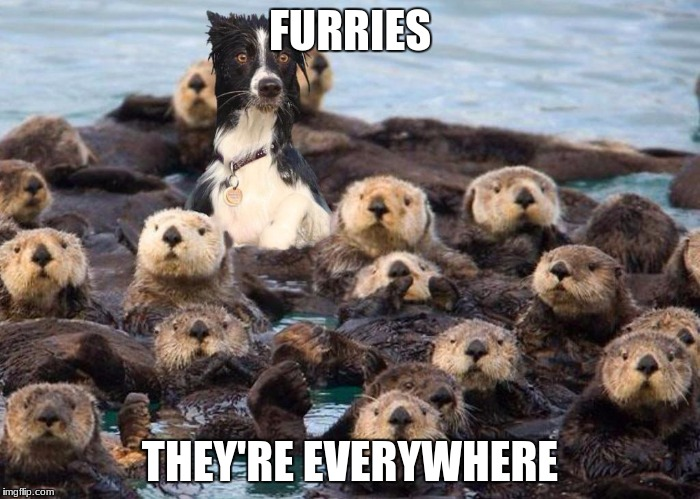 FURRIES THEY'RE EVERYWHERE | image tagged in otter | made w/ Imgflip meme maker