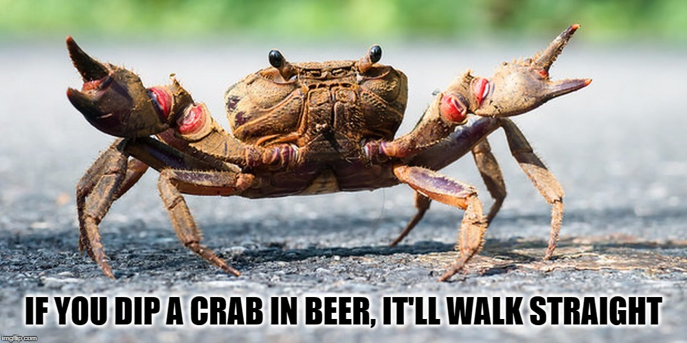 IF YOU DIP A CRAB IN BEER, IT'LL WALK STRAIGHT | image tagged in memes,crabs,drunk crab | made w/ Imgflip meme maker