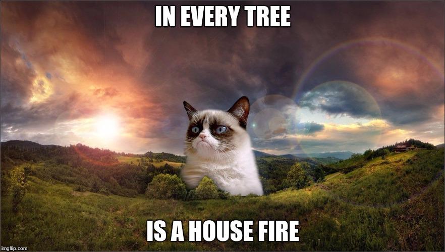 Logic | IN EVERY TREE IS A HOUSE FIRE | image tagged in grumpy cat,house fire | made w/ Imgflip meme maker