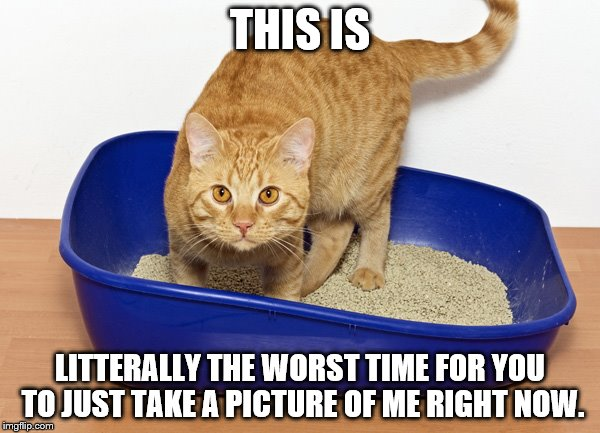 "I hope the ""typo"" isn't taken to litterally...This is so bad isn't it? 