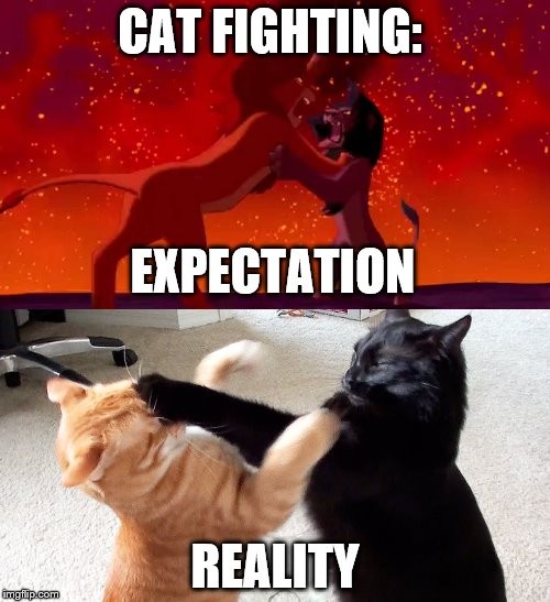 Expectations vs Reality: Cat Fight Edition! | CAT FIGHTING: REALITY EXPECTATION | image tagged in cat fight,expectation vs reality,lion king,cats | made w/ Imgflip meme maker