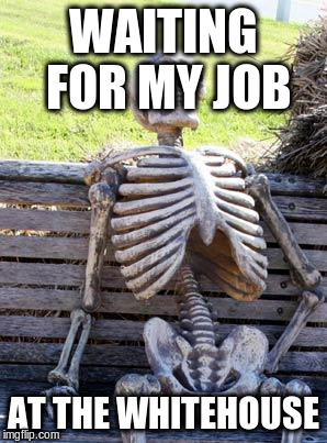 Waiting Skeleton Meme | WAITING FOR MY JOB AT THE WHITEHOUSE | image tagged in memes,waiting skeleton | made w/ Imgflip meme maker