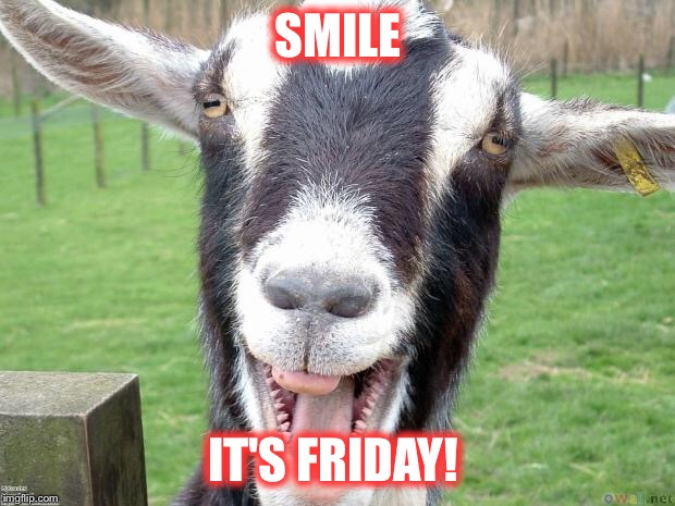 Funny Goat | SMILE IT'S FRIDAY! | image tagged in funny goat | made w/ Imgflip meme maker