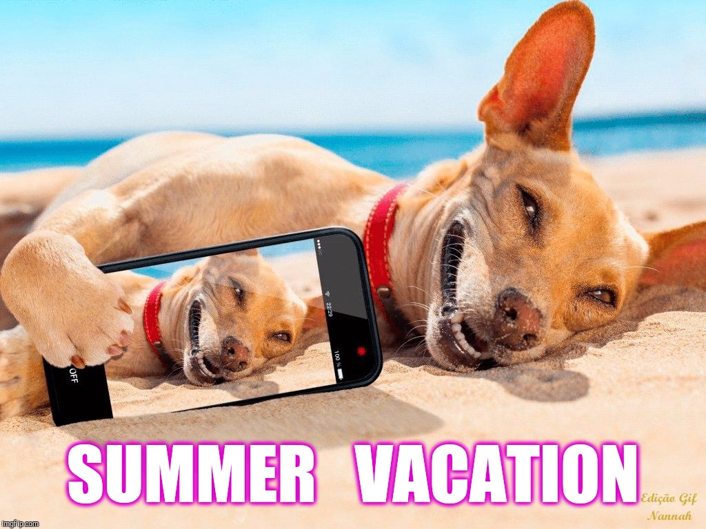 Sun, Surf, Gravy Train | SUMMER   VACATION | image tagged in memes,beach,lucky dog,vacation | made w/ Imgflip meme maker