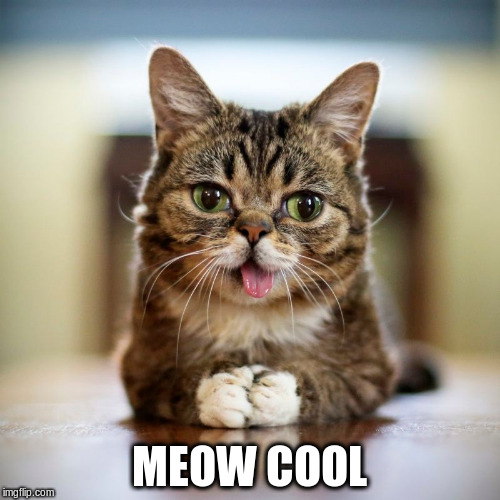 MEOW COOL | made w/ Imgflip meme maker