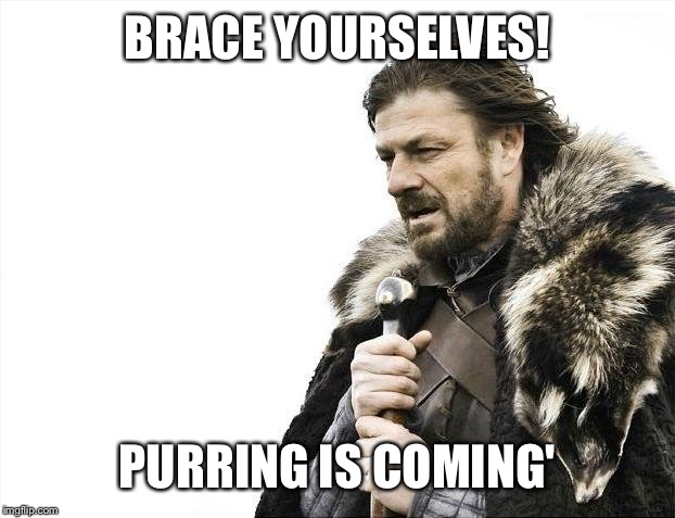 Brace Yourselves X is Coming Meme | BRACE YOURSELVES! PURRING IS COMING' | image tagged in memes,brace yourselves x is coming | made w/ Imgflip meme maker