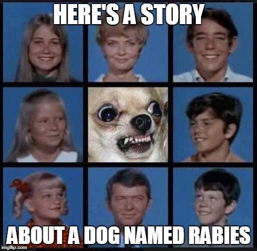mad chihuahua | HERE'S A STORY ABOUT A DOG NAMED RABIES | image tagged in chihuahua | made w/ Imgflip meme maker