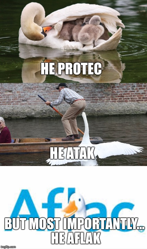He Protec, He Atak, But Most Importantly... | HE PROTEC BUT MOST IMPORTANTLY... HE AFLAK HE ATAK | image tagged in memes,animals | made w/ Imgflip meme maker