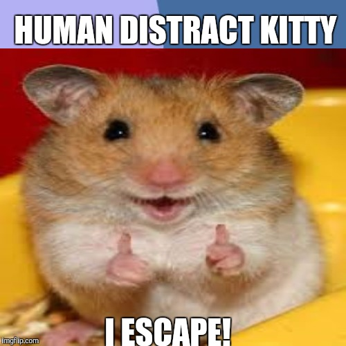 HUMAN DISTRACT KITTY I ESCAPE! | made w/ Imgflip meme maker