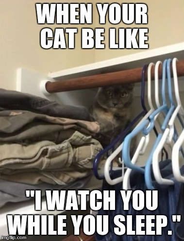 "WHEN YOUR CAT BE LIKE ""I WATCH YOU WHILE YOU SLEEP."" 