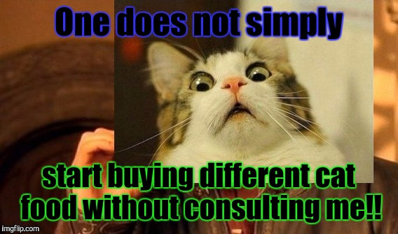 Show a little consideration! :D | One does not simply start buying different cat food without consulting me!! | image tagged in funny,one does not simply,scared cat,memes,cats,animals | made w/ Imgflip meme maker