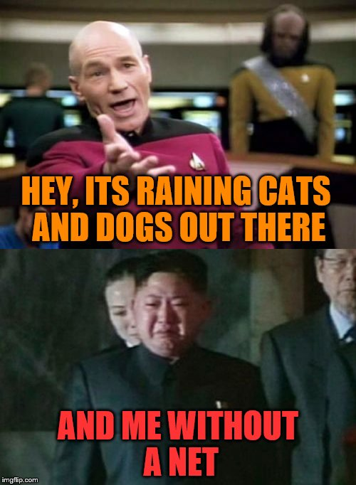 There could be worse things I guess | HEY, ITS RAINING CATS AND DOGS OUT THERE AND ME WITHOUT A NET | image tagged in picard wtf,kim jong un sad | made w/ Imgflip meme maker