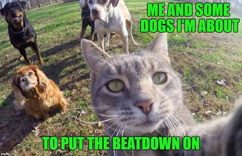 ME AND SOME DOGS I'M ABOUT TO PUT THE BEATDOWN ON | made w/ Imgflip meme maker