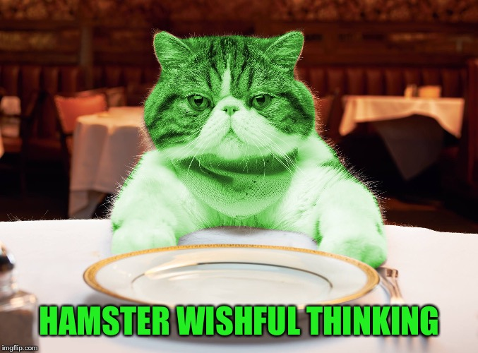 RayCat Hungry | HAMSTER WISHFUL THINKING | image tagged in raycat hungry | made w/ Imgflip meme maker