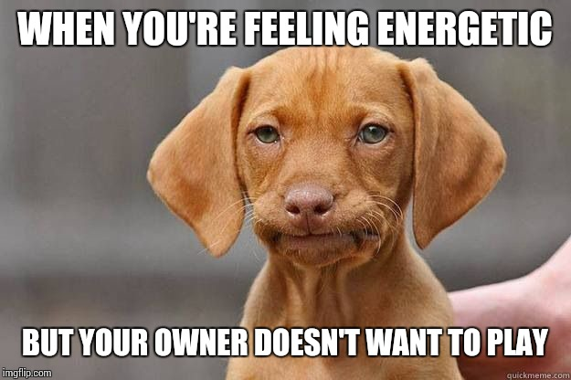 We get tired too! | WHEN YOU'RE FEELING ENERGETIC BUT YOUR OWNER DOESN'T WANT TO PLAY | image tagged in disapointed dog | made w/ Imgflip meme maker