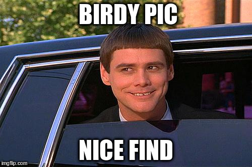 BIRDY PIC NICE FIND | made w/ Imgflip meme maker