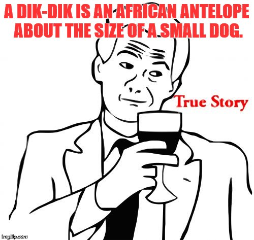 true story | A DIK-DIK IS AN AFRICAN ANTELOPE ABOUT THE SIZE OF A SMALL DOG. | image tagged in true story | made w/ Imgflip meme maker