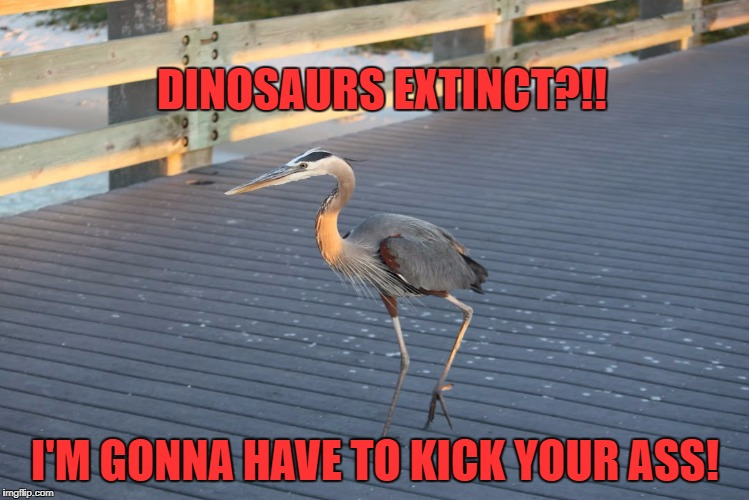 Extinct?! | DINOSAURS EXTINCT?!! I'M GONNA HAVE TO KICK YOUR ASS! | image tagged in dinosaurs,dinosaur,great blue heron,bird,angry birds | made w/ Imgflip meme maker