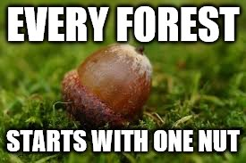 Don't mind me, I'm just planting a seed | EVERY FOREST STARTS WITH ONE NUT | image tagged in nuts,happy little trees | made w/ Imgflip meme maker
