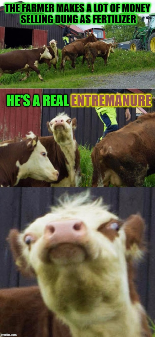 Bad pun cow  | THE FARMER MAKES A LOT OF MONEY SELLING DUNG AS FERTILIZER HE'S A REAL ENTREMANURE ENTREMANURE | image tagged in bad pun cow | made w/ Imgflip meme maker