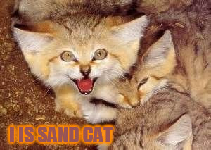 I IS SAND CAT | made w/ Imgflip meme maker
