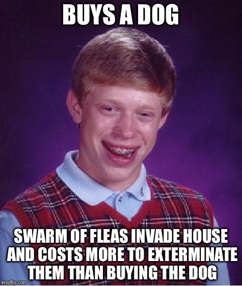Bad Luck Brian Meme | BUYS A DOG SWARM OF FLEAS INVADE HOUSE AND COSTS MORE TO EXTERMINATE THEM THAN BUYING THE DOG | image tagged in memes,bad luck brian | made w/ Imgflip meme maker
