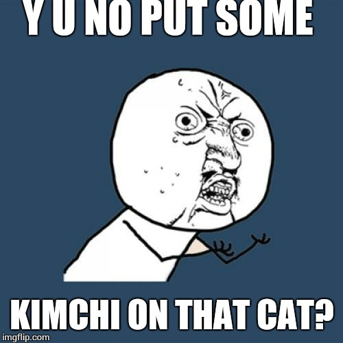 Y U No Meme | Y U NO PUT SOME KIMCHI ON THAT CAT? | image tagged in memes,y u no | made w/ Imgflip meme maker