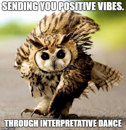 SENDING YOU POSITIVE VIBES. THROUGH INTERPRETATIVE DANCE | image tagged in positive vibes,interpretative dance,owl | made w/ Imgflip meme maker