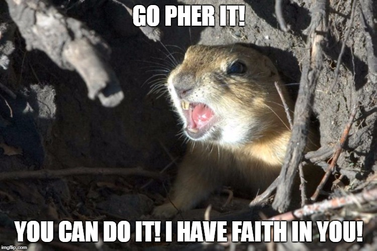 Go Pher It! | GO PHER IT! YOU CAN DO IT! I HAVE FAITH IN YOU! | image tagged in encouraging gopher,gophers,faith | made w/ Imgflip meme maker