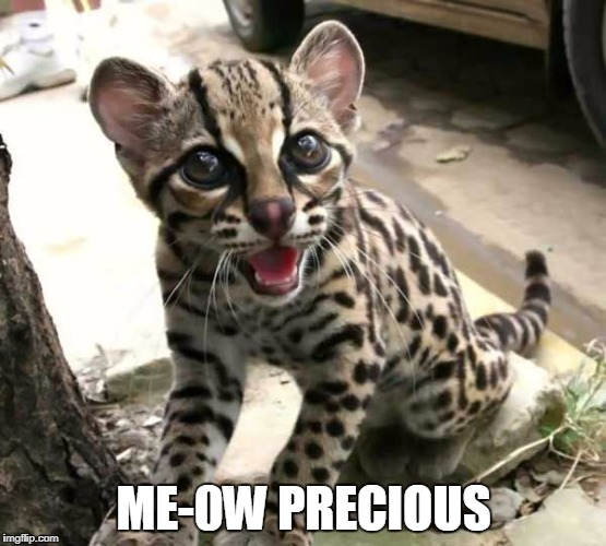 golem cat | ME-0W PRECIOUS | image tagged in cat | made w/ Imgflip meme maker