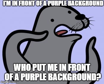 Homophobic Seal | I'M IN FRONT OF A PURPLE BACKGROUND WHO PUT ME IN FRONT OF A PURPLE BACKGROUND? | image tagged in memes,homophobic seal | made w/ Imgflip meme maker