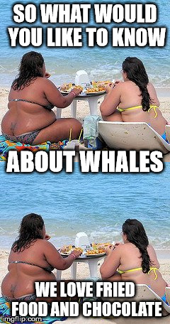 SO WHAT WOULD YOU LIKE TO KNOW WE LOVE FRIED FOOD AND CHOCOLATE ABOUT WHALES | made w/ Imgflip meme maker