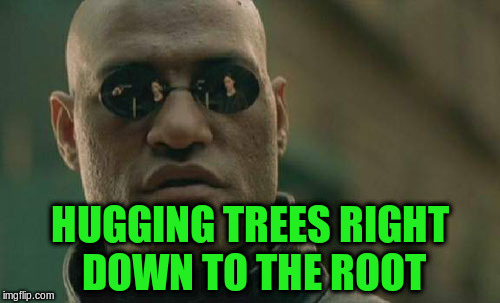 Matrix Morpheus Meme | HUGGING TREES RIGHT DOWN TO THE ROOT | image tagged in memes,matrix morpheus | made w/ Imgflip meme maker