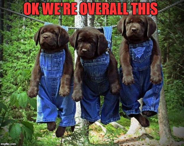 OK WE'RE OVERALL THIS | image tagged in pups | made w/ Imgflip meme maker