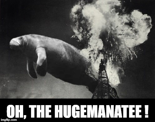OH, THE HUGEMANATEE ! | image tagged in huge manatee | made w/ Imgflip meme maker
