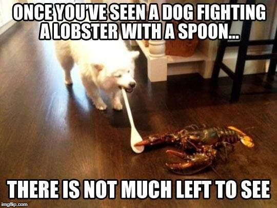 Goodnight, everybody! | image tagged in dog,lobster,spoon | made w/ Imgflip meme maker