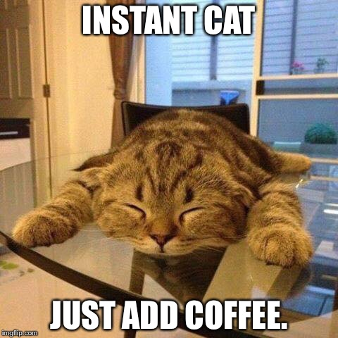 Insta cat | INSTANT CAT JUST ADD COFFEE. | image tagged in coffee addict | made w/ Imgflip meme maker