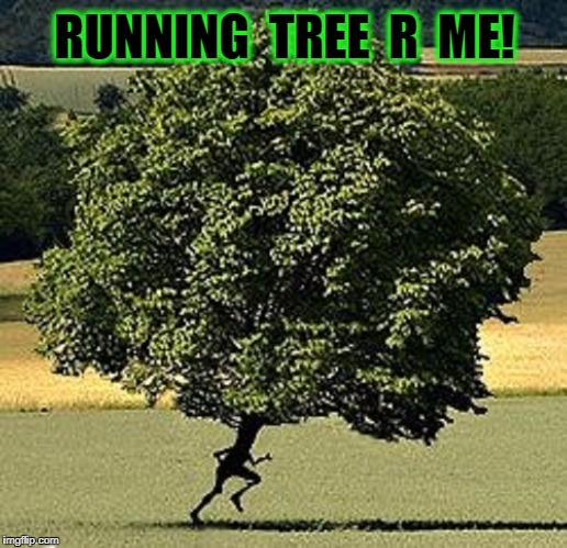 R - Me - Knee - N Trees | RUNNING  TREE  R  ME! | image tagged in vince vance,running tree,run forrest run,run forest run,the chief named me,trees | made w/ Imgflip meme maker