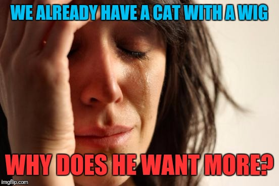 First World Problems Meme | WE ALREADY HAVE A CAT WITH A WIG WHY DOES HE WANT MORE? | image tagged in memes,first world problems | made w/ Imgflip meme maker