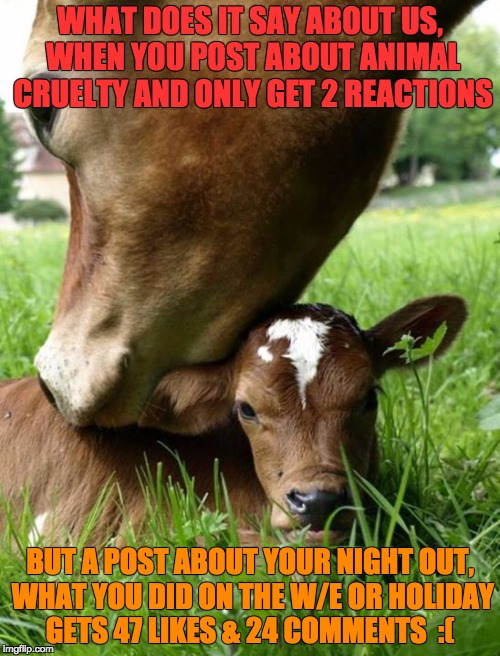WHAT DOES IT SAY ABOUT US, WHEN YOU POST ABOUT ANIMAL CRUELTY AND ONLY GET 2 REACTIONS BUT A POST ABOUT YOUR NIGHT OUT, WHAT YOU DID ON THE  | image tagged in cow and calf | made w/ Imgflip meme maker
