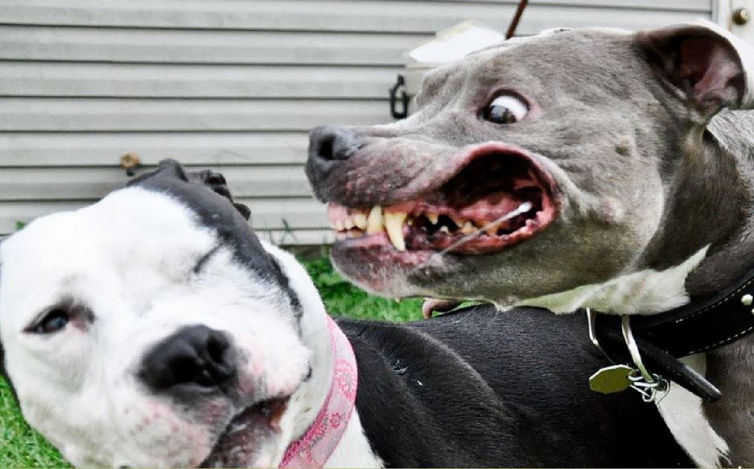 Annoyed Dog Face