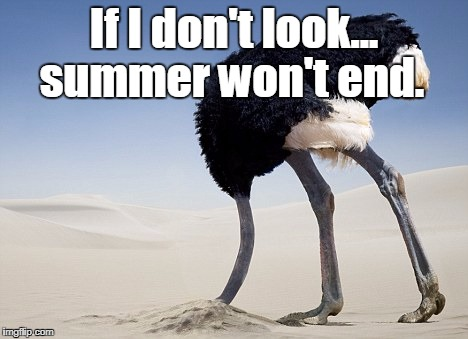 If I don't look... summer won't end. | image tagged in ostrich hide | made w/ Imgflip meme maker