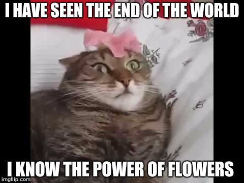 I HAVE SEEN THE END OF THE WORLD I KNOW THE POWER OF FLOWERS | image tagged in cats,end of the world | made w/ Imgflip meme maker