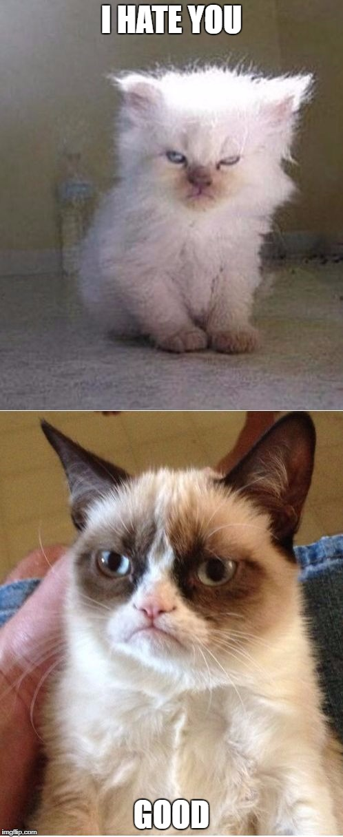 Grumpy Cats | I HATE YOU GOOD | image tagged in grumpy cats | made w/ Imgflip meme maker