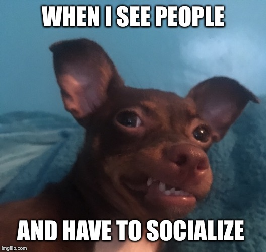 WHEN I SEE PEOPLE AND HAVE TO SOCIALIZE | image tagged in awkward doggo | made w/ Imgflip meme maker