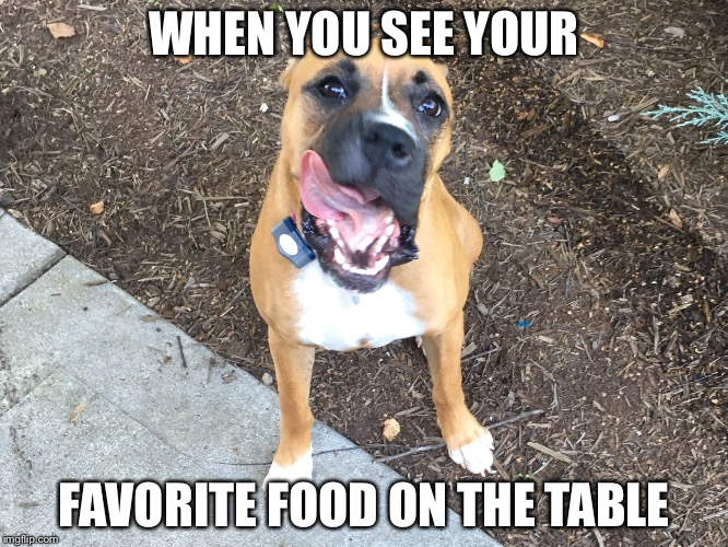 Favorite food | WHEN YOU SEE YOUR FAVORITE FOOD ON THE TABLE | image tagged in funny dogs | made w/ Imgflip meme maker