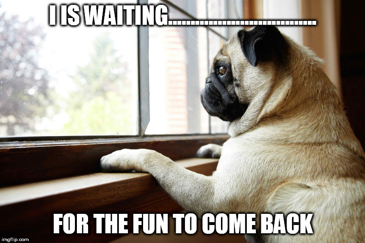 I IS WAITING................................. FOR THE FUN TO COME BACK | image tagged in lonely dog | made w/ Imgflip meme maker