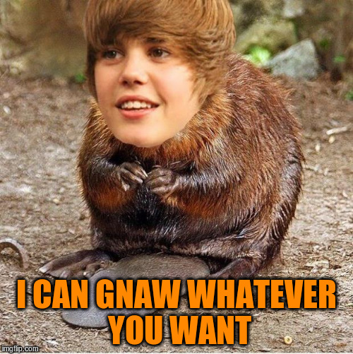 I CAN GNAW WHATEVER YOU WANT | made w/ Imgflip meme maker